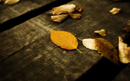 Leaves_Wallpaper_by_emats