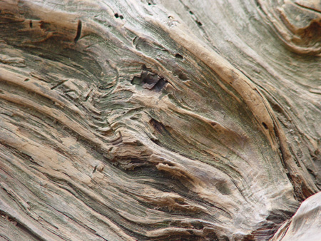 Wood_Texture_by_melstock