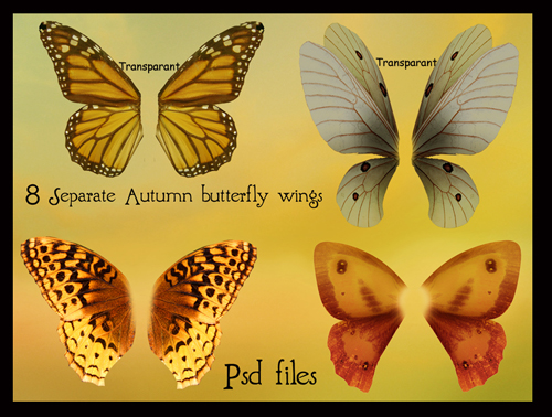 psd_autumn_butterfly_wings_set_by_Adaae_stock
